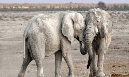 elefantes juntos
