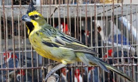 Aves Entre Rios